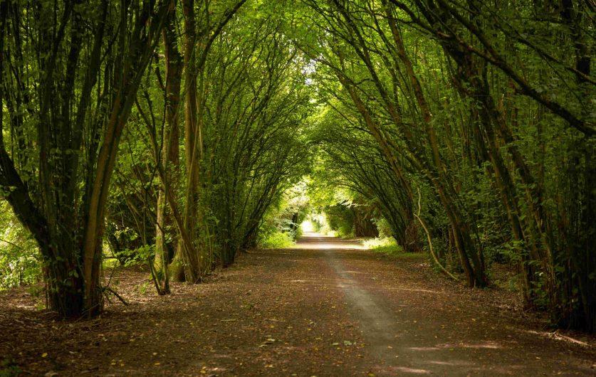 Chemin de la voie verte de la plaine de la Scarpe