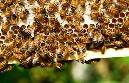 Les ruches Embarek