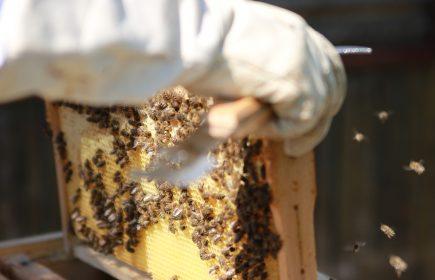 Les ruches Hochart