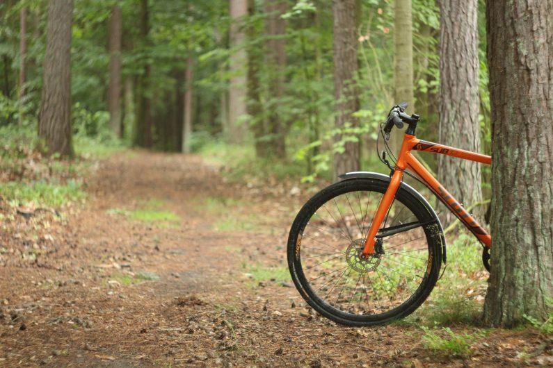 Vélo en forêt de Marchiennes