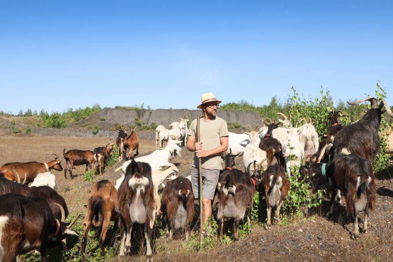 Julien le berger avec ses chèvres sur le terril ©Karen Saint-Patrice