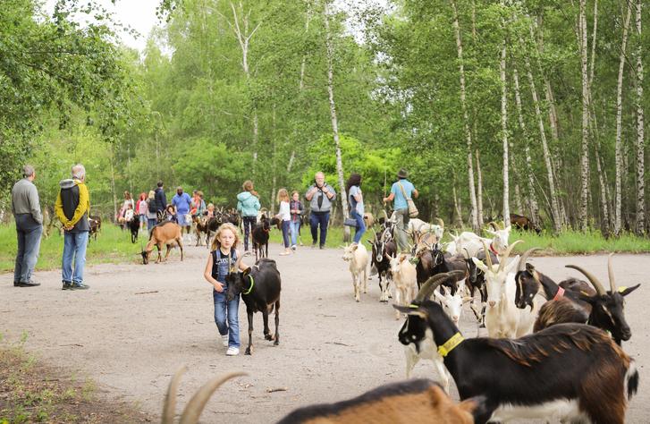 Allez, je t'amène à la ferme ©Karen Saint-Patrice